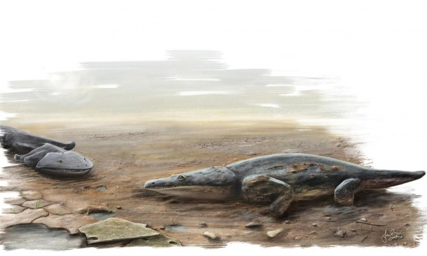 에딘버러 대학 연구자들이 발견한 거대 육식성 양서류 메토포사우루스 알가르벤시스의 복원도. Photograph: University of Edinburgh/PA