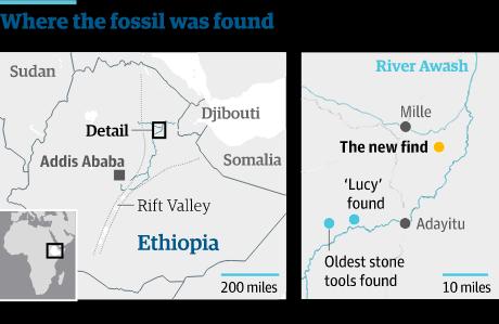 레디-게라루라고 불리는 곳에서 발견된 새로운 화석은 현생 인류의 조상으로 불리는 아우스트랄로피테쿠스 아파렌시스(Australopithecus afarensis)와 공통으로 가지고 있는 원시적 특징 몇 가지를 보여준다. 가장 잘 알려진 표본인 300만년 된 화석 루시는 1974 년에 레디-게라루와 40마일밖에 안 떨어진 하다르에서 발굴되었다. 하지만 이번에 발견된 화석은 더 현대적인 특징들도 가지고 있다. 어떤 특징은 사람 속에서만 발견되는 것으로, 이전의 화석들보다 위아래로 더 얕은 형태의 턱뼈가 그 예이다.