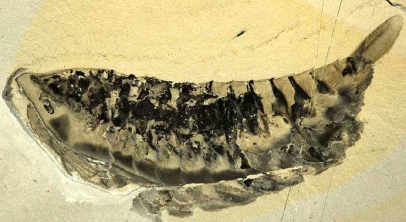 야우닉 쿠테나이이. 이미지 제공: 진-버나드 카론 / 왕립 온타리오 박물관