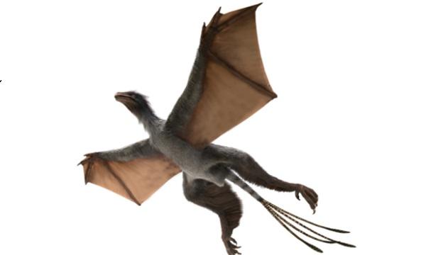 깃털은 물론이고 박쥐처럼 비막으로 된 날개와 날개를 지탱하는 길게 튀어나온 손목뼈까지 가지고 있는 독특한 공룡인 이 치가 살아있을 때의 모습을 그린 복원도. Photograph: Dinostar Co. Ltd.