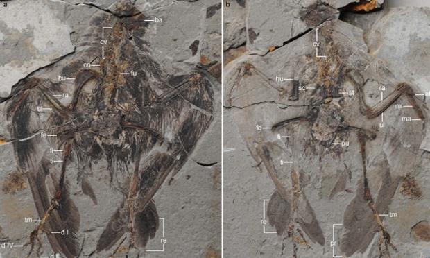 화석의 전체 모습. 연구자가 암석 덩어리를 쪼개서 열자 화석이 발견되었다. Photograph: Wang et al., Nature Communications