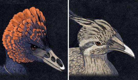 과학자들이 공룡의 주둥이에서 새의 부리가 만들어진 분자 과정을 성공적으로 재현해냈다. Credit: Image courtesy of Yale University