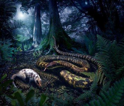 이번 연구에 기반해 크라운그룹 뱀의 조상 모습을 재구성한 그림. 줄리어스 초토니 그림. Credit: Julius Csotonyi