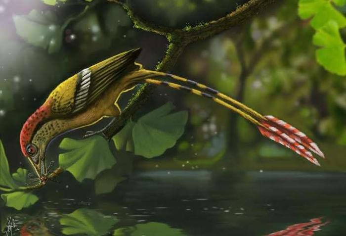 브라질 아라리페 분지에서 발견된 백악기 화석 조류의 복원도. Credit: Deverson Pepi