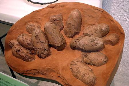 오비랍토르의 알이 있는 둥지가 미국 자연사박물관에 전시되어 있다. Image by Steve Starer, CC-BY.