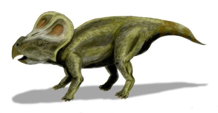 노부 타무라의 프로토케라톱스 복원도 (http://spinops.blogspot.com) CC BY 2.5 via Wikimedia Commons http://commons.wikimedia.org/wiki/File:Protoceratops_BW.jpg#/media/File:Protoceratops_BW.jpg