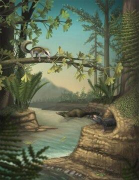 옥스포드 대학의 과학자들이 주도한 연구에 의하면 쥐라기 말기에 비해 쥐라기 중기에 포유류의 진화가 최대 10배까지 더 빠르게 일어났다고 한다. 그림에서 볼 수 있는 도코돈트류는 쥐라기 중기에 살다가 멸종한 포유류로 골격과 치아 부분에서 폭발적인 변화를 보였으며 이 변화의 일부로 생겨난 특수한 어금니에서 도코돈트라는 이름이 유래했다. Credit: April Neander