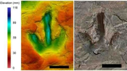 메갈로사우리푸스(Megalosauripus) 발자국의 거짓색(flase color) 사진. 색깔은 발자국의 깊이를 나타낸다. 작은 공룡의 발자국이다. Credit: Pernille Venø Troelsen