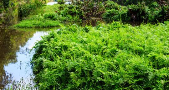 일반적으로 식물이 땅 위를 점령한 것은 녹조류 – 아마도 민물웅덩이 가장자리에 살던 – 가 해안가의 수면이 하강했을 때 간신히 살아남은 시기, 대략 4억년 전이라고 생각된다. Credit: ⓒ bannerwega / Fotolia