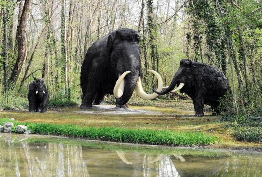 털매머드 가족의 복원도. 거대동물군으로 알려진, 역사상 가장 컸던 포유류들은 대부분 지난 8만년 동안의 기간에 사라져 갔으며 1만년 전에는 모두 멸종했다. 새로운 연구에 따르면 인류에게 책임이 있다고 한다. Credit: ⓒ photology1971 / Fotolia