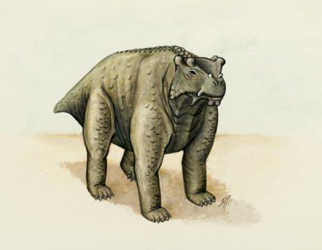 소와 거의 비슷한 몸집을 가졌던 위 그림의 전파충류는 소와 같은 방식으로 서있었다. 몸통 밑에 위치한 네 다리로 직립했던 것이다. 새로운 연구에 의하면 전파충류가 이러한 방식으로 섰던 최초의 동물일 것이라고 한다. Credit: Morgan Turner