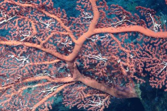 대서양 카터 해산 깊이 1 km 지점의 해양저에서 발견된 심해 산호의 모습. Credit: University of Bristol