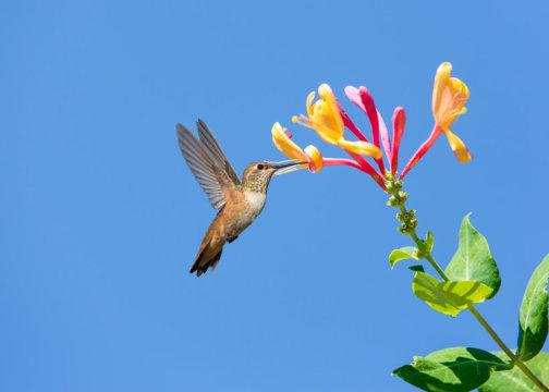 벌새. Credit: © Mariusz Blach / Fotolia