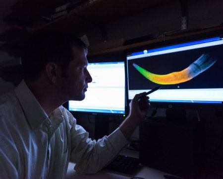 미시건 대학의 박사과정 학생인 마이클 처니가 색을 입힌 어린 털매머드 엄니의 CT 스캔 이미지를 보여주고 있다. 서로 다른 색깔은 성장연도를 나타낸다. Credit: Image courtesy of University of Michigan