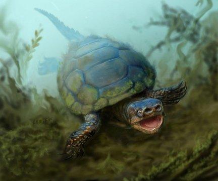 7600만 년 전 멸종한 돼지코 거북 화석이 유타에서 발견되다