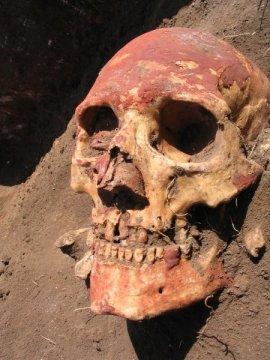 얌나야인은 청동기시대 초기 (약 5천 년 전) 에 현재의 코카서스 지방에서 중앙아시아로 이주해 와서 아파나시에보 문화를 발달시켰다. 아파나시에보는 Y. 페스티스를 보유하고 있던 청동기시대 인구집단들 중 하나였다. Credit: Natalia Shishlina