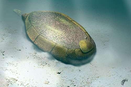 프로토킨크투스 만실라엔시스 (Protocinctus mansillaensis) 의 살아있을 때 모습. Credit: O. Sanisidro