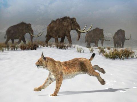 160만 년 전에 이베리아 반도에 살았던 이베리아스라소니의 복원도. Credit: José Antonio Peñas (Sinc)