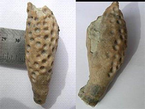고대의 벌레 모양 기생충 때문에 몸의 일부에 구멍이 나거나 부풀어 오른 바다나리 화석. Credit: Carlton Brett