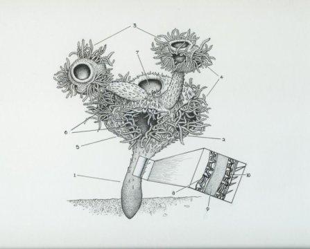나마칼라투스 헤르마나스테스 (Namacalathus hermanastes) 의 복원도. Credit: J. Sibbick
