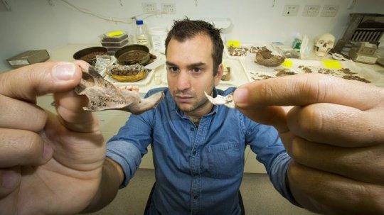 줄리엔 루이스 박사가 동티모르에서 발견된 거대 쥐의 턱뼈와 현생 쥐의 턱뼈를 들어 비교해 보이고 있다. Credit: Stuart Hay, ANU