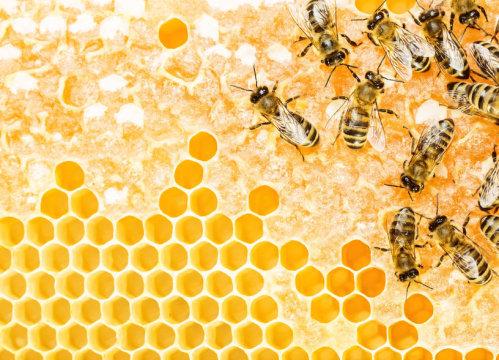 일하고 있는 벌들. Credit: © gertrudda / Fotolia