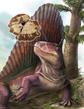 """디메트로돈과 프린스에드워드섬에서 발견된 """"바티그나투스"""" 화석. 배경에는 왈키아 나무가 (프린스에드워드섬에서 쉽게 볼 수 있는 화석) 보인다. Credit: Illustration by Danielle Dufault"""