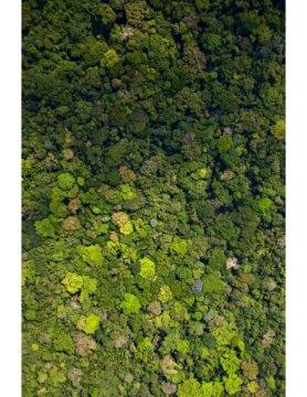 프린스턴 대학의 연구자들이 육상 생물군계 진화에 대한 새로운 전지구적 이론에서 식물이 환경을 구성하는 수동적인 존재가 아니라 생태계의 생산성과 조성을 결정하는 방식으로 능동적인 활동을 하고 있을 수도 있다고 주장했다. Credit: Photo by Smithsonian Tropical Research Institute, Panama