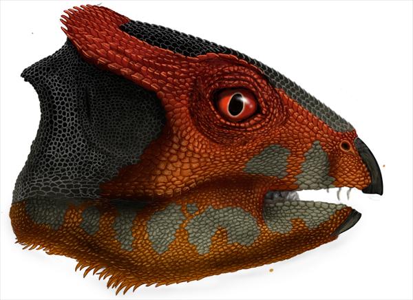 연구자들이 뒷다리로 서고 스파니엘 정도 크기였던 새로운 초식공룡 종 후알리안케라톱스 우카이와넨시스 (Hualianceratops wucaiwanensis) 를 보고했다. Credit: Portia Sloan Rollings