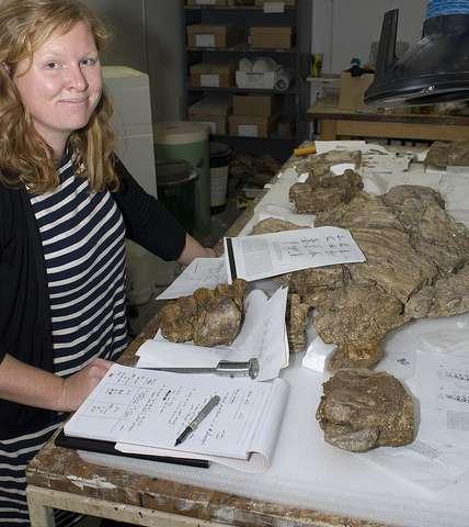 루시 레이히가 쿤바라사우루스 이에베르시의 완모식표본 골격을 연구하고 있다. Credit: Steve Salisbury.