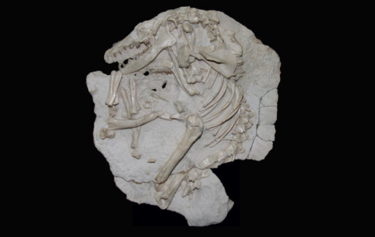 20151226 mammal