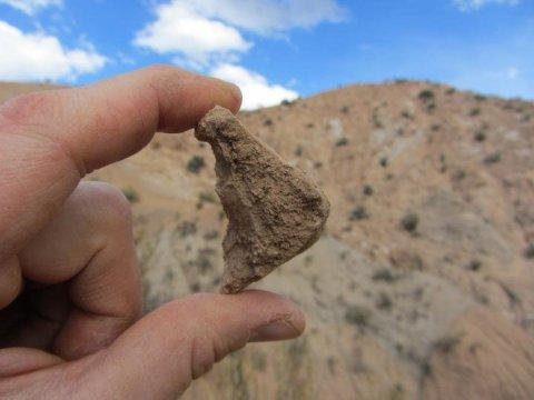 볼리비아의 케브라다 온다 부근에서 발견된 멸종한 땅거북인 켈로노이디스 (Chelonoidis) 속의 껍질 화석은 알티플라노가 1천3백만 년 전에는 해발 1천 미터도 채 되지 않는 높이였다는 것을 보여주는 화석들 중 하나이다. Credit: Darin Croft