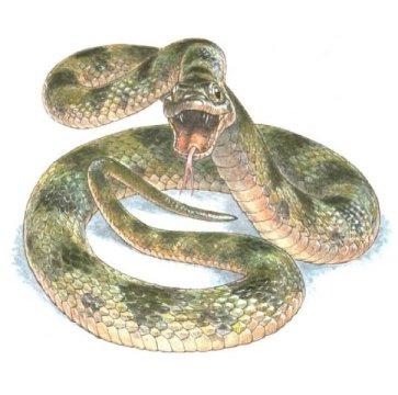 뱀과(family Colubridae) 로 분류되는 뱀의 복원도. Credit: Jim Robbins, artist