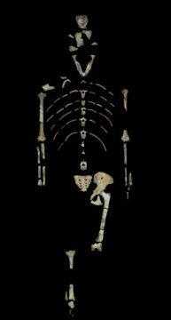 3백1십8만 년 된 아우스트랄로피테쿠스 아파렌시스 (Australopithecus afarensis) 화석 표본, 루시. Credit: Image provided by John Kappelman, UT Austin