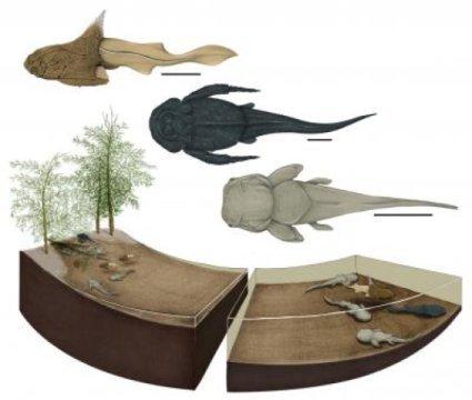 스트뤼트에서 발견된 산란장 생태계가 어떤 모습이었을지를 보여주는 그림. 세 종류의 판피어류 종이 이곳에서 발견되었다. 각각의 종은 위에서부터 투리사스피스 스트루덴시스 (왼쪽 측면에서 본 모습), 그로실레피스 리키키 (위에서 본 모습), 필롤레피스 운둘라타 (위에서 본 모습). Credit: Image by Justine Jacquot-Hameon/PLOS-One.